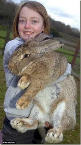 Ralph, il coniglio più grande del mondo